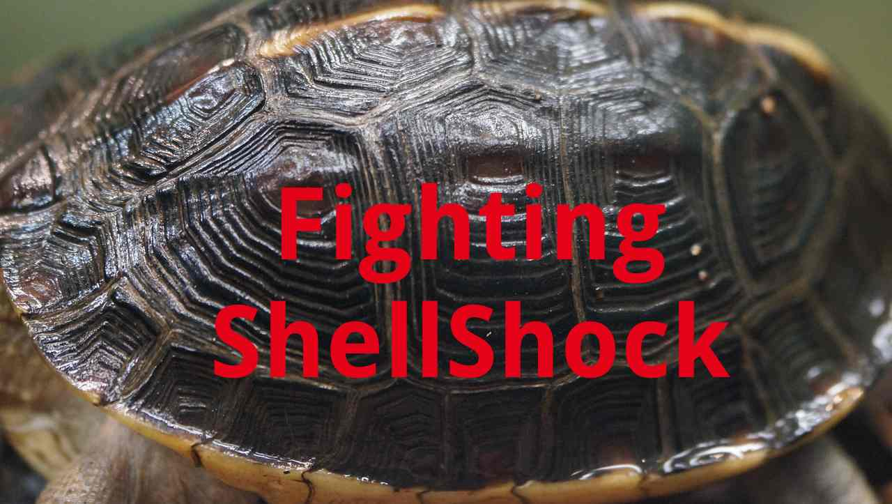 Fighting ShellShock