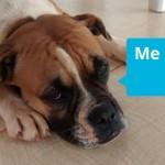 Sad-looking dog lying on the floor